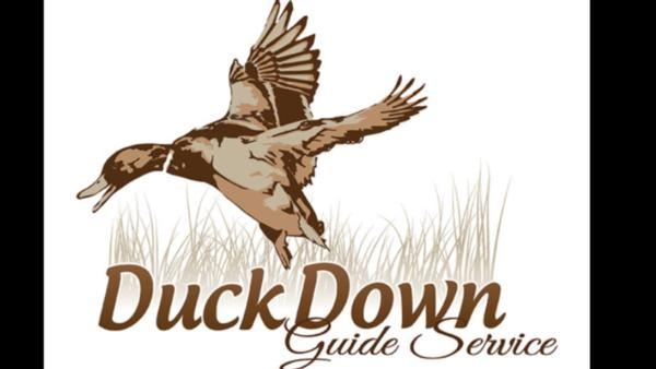Arkansas Dove Hunts