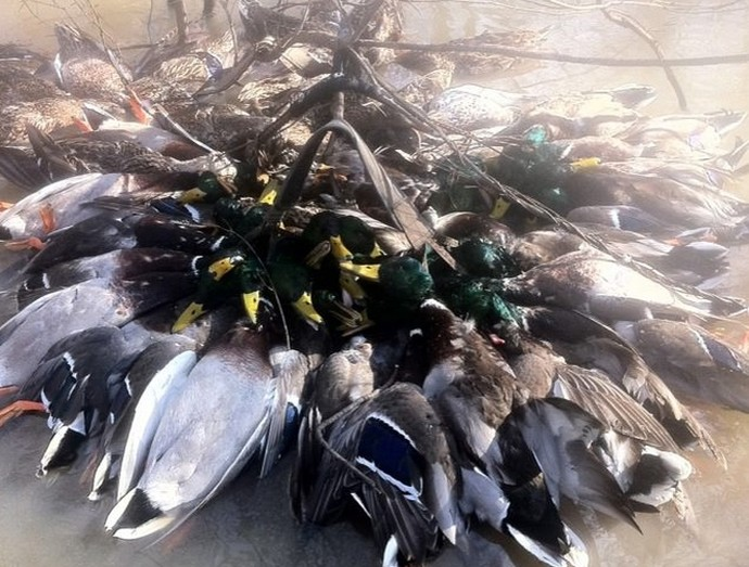 stuttgart arkansas duck hunting trips